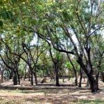 El País / Reportaje, Sequia se manifiestan por el cambio de clima al acercarse la Semana Santa, en los árboles del Parque Mirador Sur, Hoy / Francisco Reyes / 11 / 04 / 2014 /