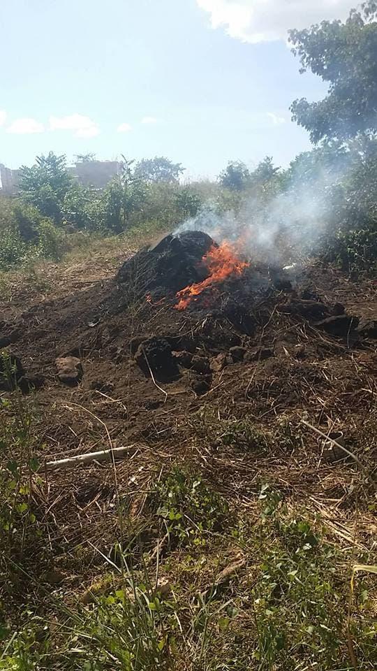 Autoridades encarcelarán los que violen la ley  y elaboraren  carbón  vegetal