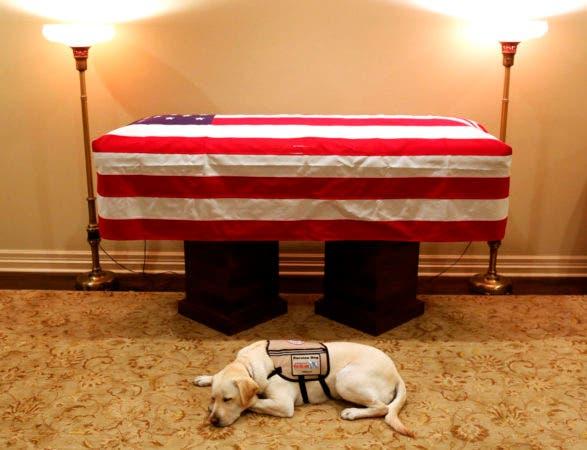 29. Sully, el perro de servicio de Bush se encuentra frente a su ataúd en Houston. El 41 ° presidente murió el viernes en su casa en Houston a los 94.