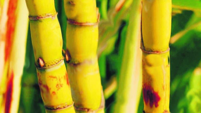 Una de las zonas más apropiadas para producir caña y azúcar