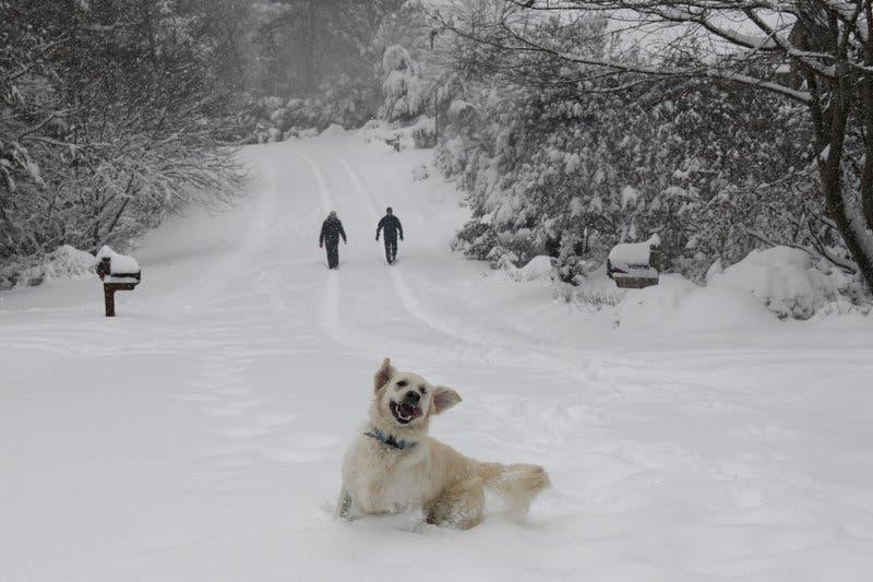 Intensa tormenta de nieve azota el sureste de EEUU; cancelan centenares de vuelos