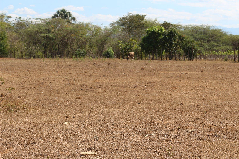 PRSC llama al gobierno ayudar a ganaderos de Línea Noroeste afectados por fuerte sequía