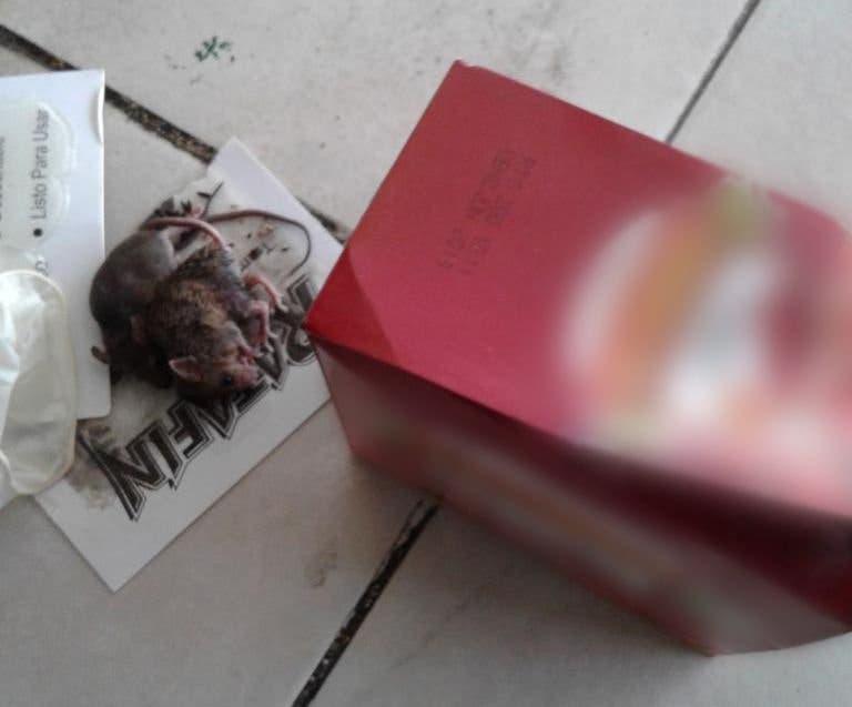 Vea en video las condiciones de establecimientos cerrados por  Pro Consumidor por tener ratas, cucarachas y gusanos