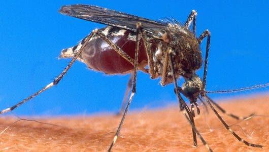 Video: Gremios de salud tienen posiciones distintas sobre el tema del dengue;  dan recomendaciones