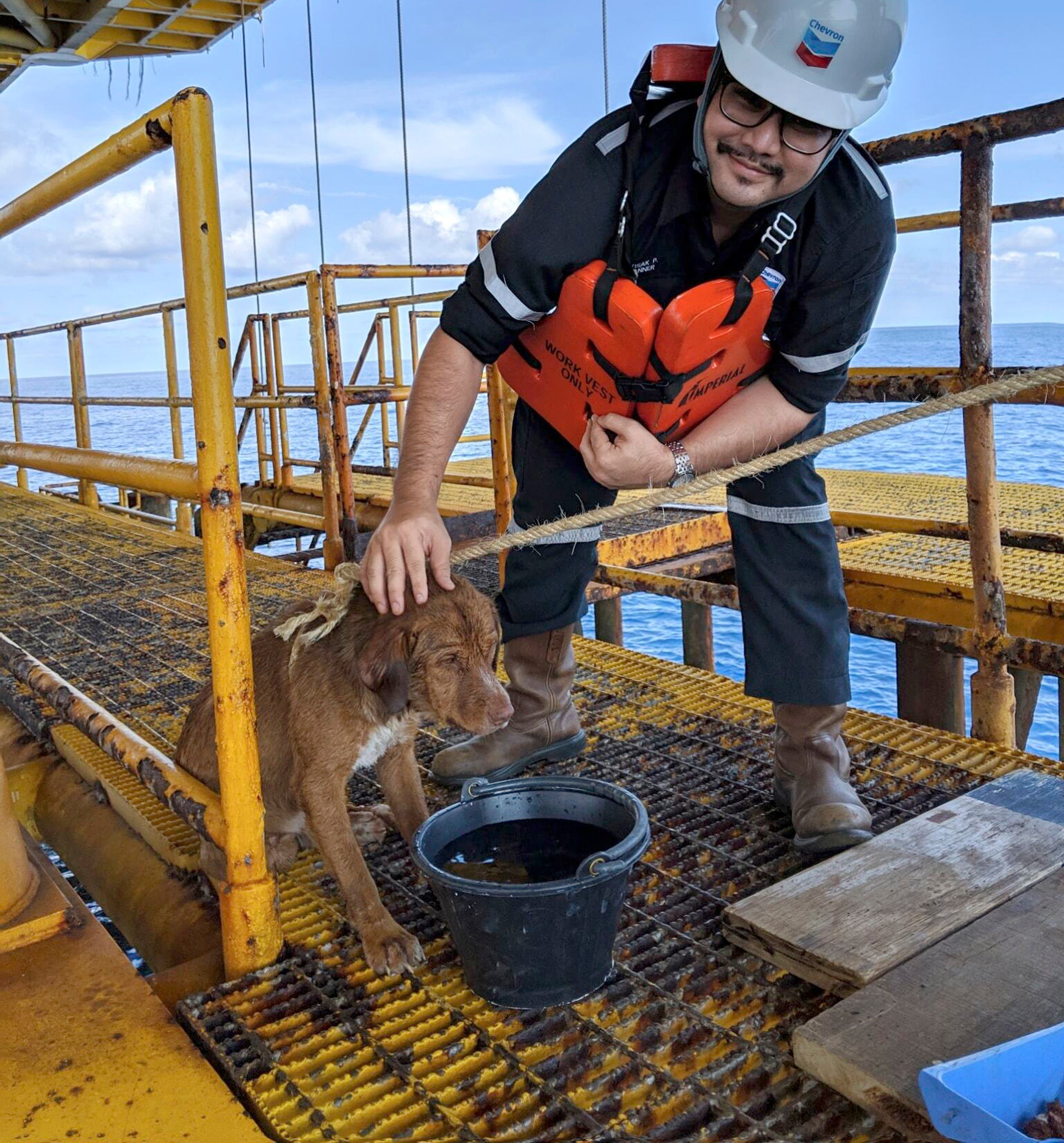 ¡Insólito! Perro nadó 220 kilómetros en costa en Tailandia