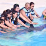 Delfinoterapia, es del nombre de la terapia que se realiza con delfines