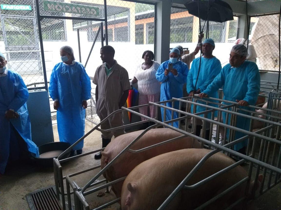 Director del FEDA visita proyectos de ganado vacuno y porcino en Villa Altagracia