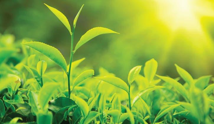 Casi 600 especies de plantas se han extinguido de la faz de la Tierra