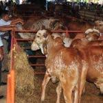 Reportaje sobre la ganadería para mejorar la raza y la producción de Leche, en la Feria Ganadera Distrito Nacional. Hoy/ Andrés Monción 20/07/2011