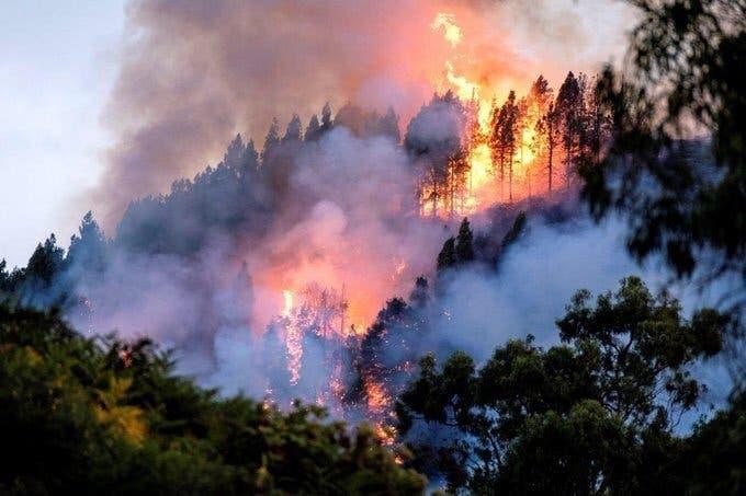 Bolsonaro: ONGs estarían provocando incendios en Amazonas