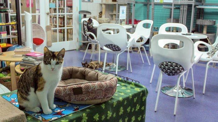 Pekín cambia el café con leche por el café con gatos y perros