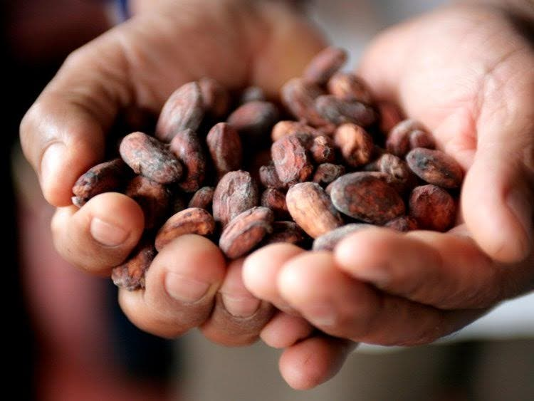 El sagrado Cacao