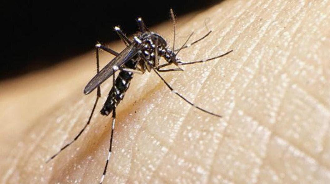 Suben a 22 las muertes por dengue,según Salud Pública