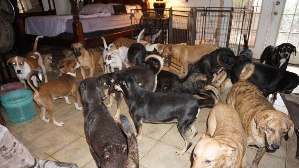 ¡Bonita acción! 97 perros callejeros fueron salvados del huracán Dorian por una mujer que lo acogió en su casa en Bahamas