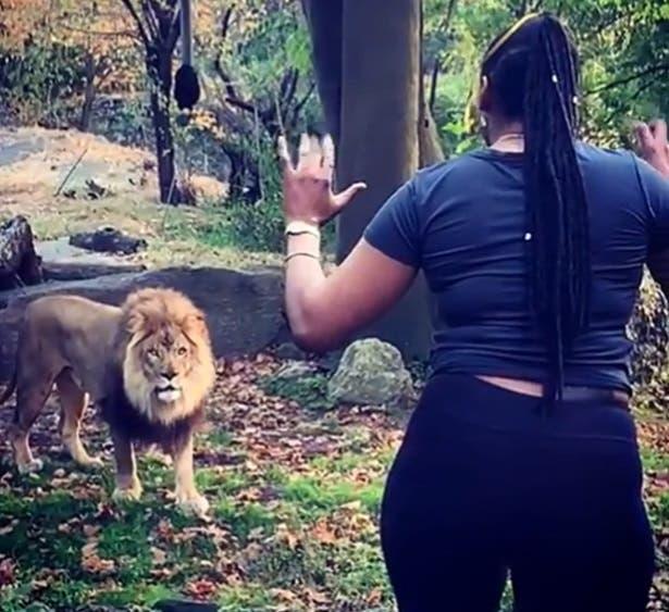 Video: Policía NY persigue mujer le zarandeó a león y jirafas en zoológico Bronx