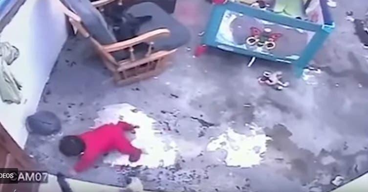 Video: ¡Insólito! Gata salva de «milagro» a un bebé de caer por unas escaleras