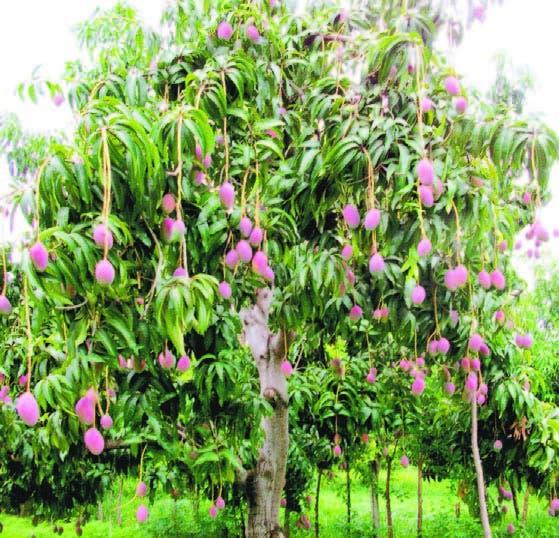 Exhortan productores de frutas mejorar calidad y el ambiente