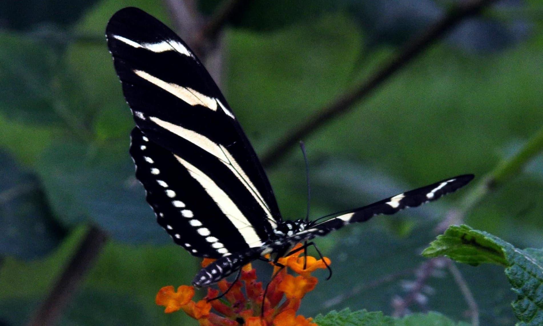 Un espacio dedicado a la naturaleza y la libertad en el Jardín de Mariposas Unphu - Hoy Digital (República Dominicana)
