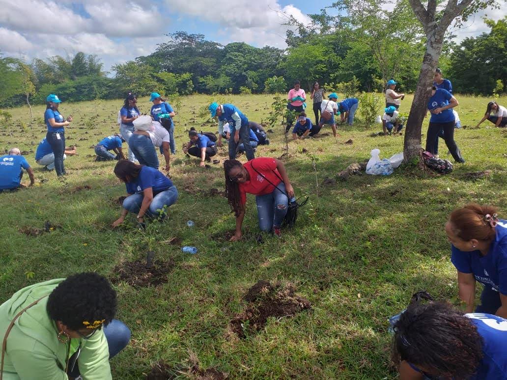 """Medio Ambiente dice que plantó más de un millón de árboles en el """"Mes de la Reforestación"""""""