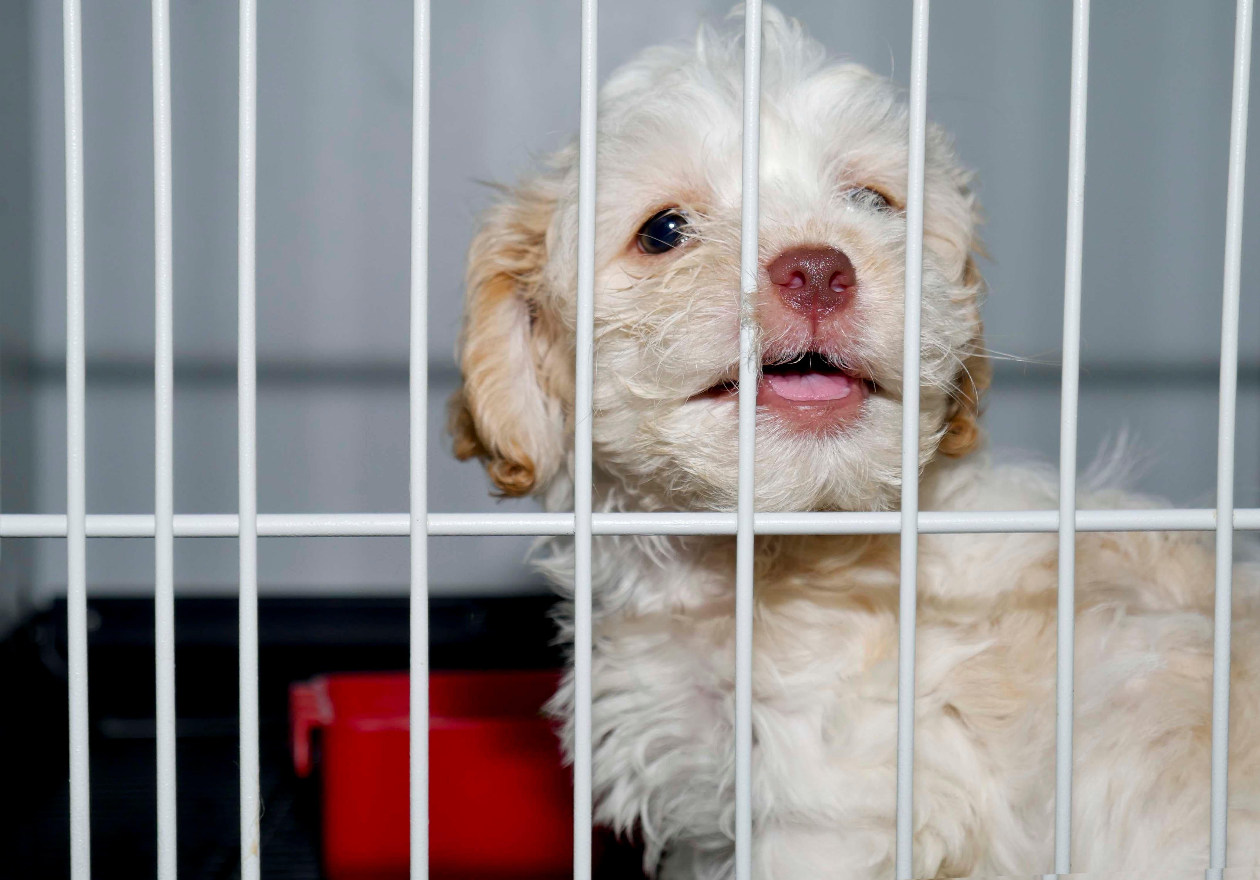 Pide aplicar sobre protección de animal y tenencia responsable - Hoy Digital (República Dominicana)