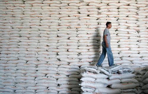 Exportación de azúcar y derivados cayó 10 % en RD en un año