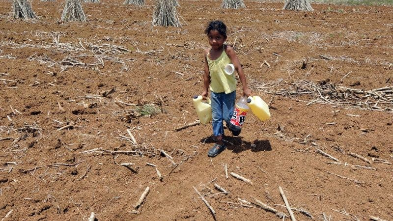 A Nicaraguan walks looking for water while working in a cassava plantation battered by a severe drought, in a farm in the Costa Rican area of Los Chiles, about 280 kilometres north of San Jose on May 23, 2008. The Government has declared a state of emergency in the northern part of the country to help farmers and ranchers who suffer the effects of the drought.  AFP PHOTO/Yuri Cortez