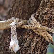Desnudos y en un árbol mujer amarra a sus hijos de 10 y 12 años en La Vega