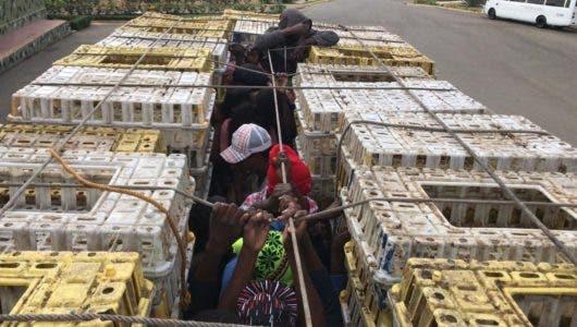 Haitianos viajaban escondidos en cajas de pollos cuando fueron apresados en Dajabón