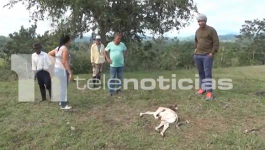 """Video: Alarma por """"chupacabras"""" que está acabando con los cultivos y los animales"""