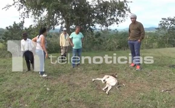 Video: Alarma por «chupacabras» que está acabando con los cultivos y los animales