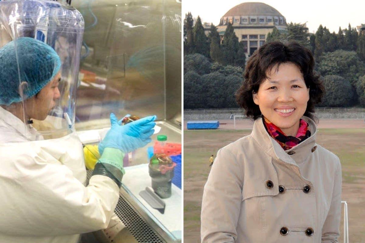 Mujer Murciélago: Viróloga china advirtió de virus casi un año antes de detectarse coronavirus