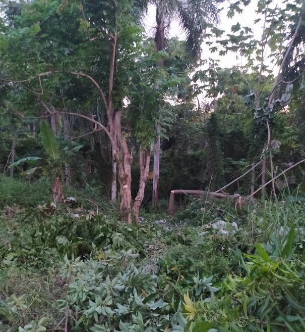 Residentes denuncian vandalismo en el km 14 de la Autopista Duarte