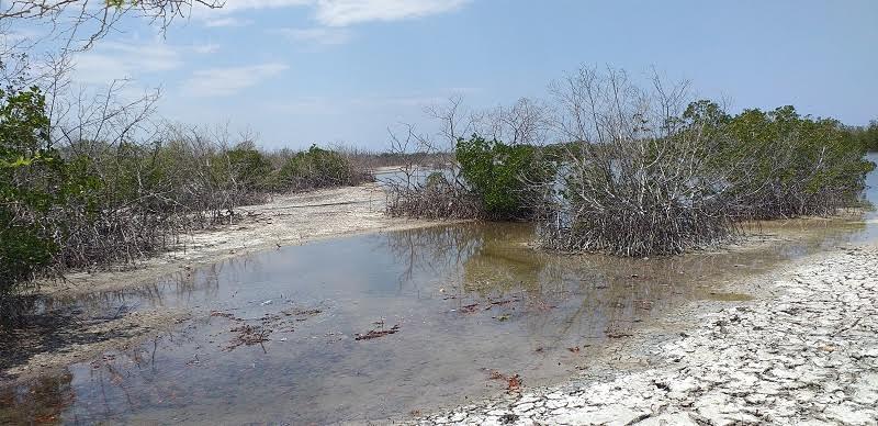 Solicitan intervención de Medio Ambiente frente a acelerada sequía de playa Estero Balsa