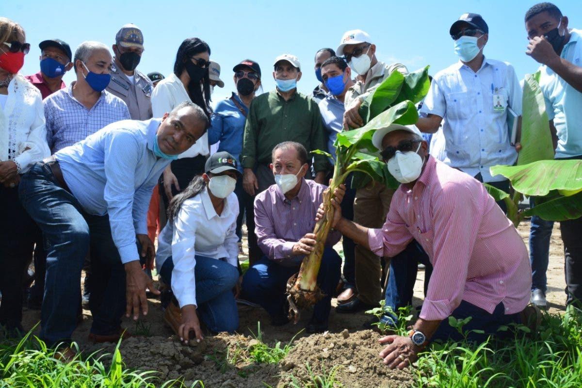 FEDA anuncia convertirá municipio de Tamayo en la capital del plátano