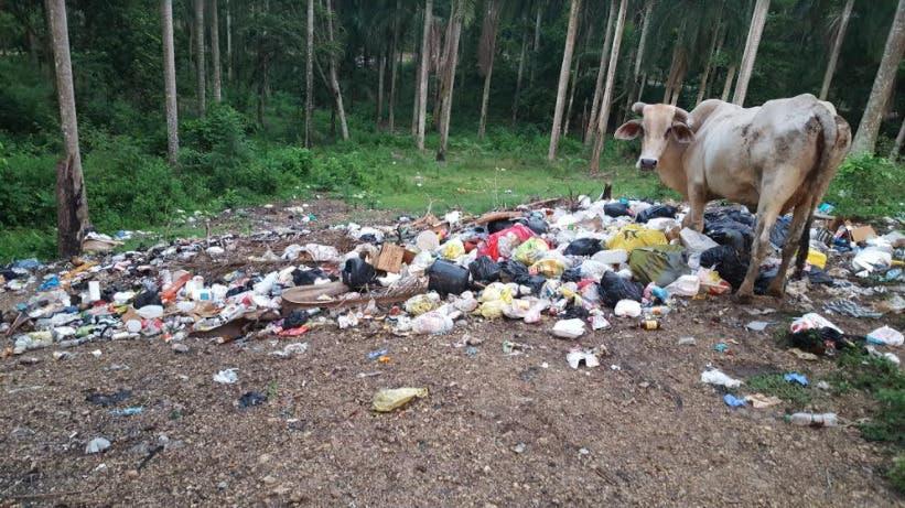 Basura de residentes de barrios de Pantoja acaban con área verde, Agronomía