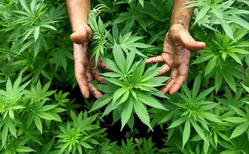 Votantes Nueva Jersey votaron para legalizar uso marihuana