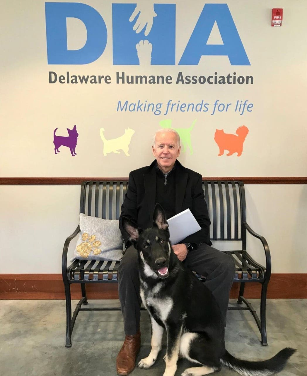 Mascota de Joe Biden será el primer perro rescatado que vivirá en la Casa Blanca