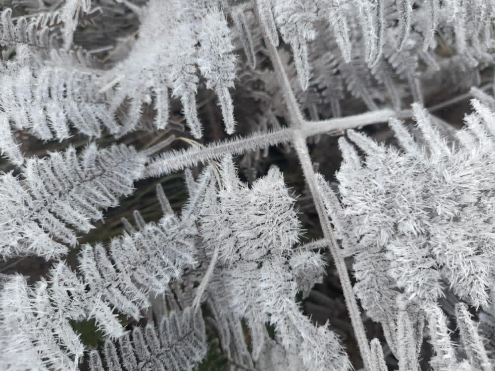 Temperaturas descienden por debajo de 0 en Valle Nuevo