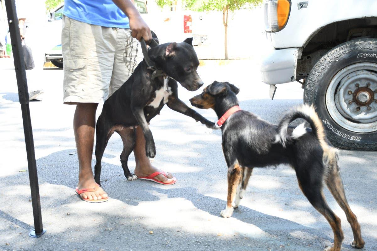 Salud Pública anuncia jornada de vacunación antirrábica de perros y gatos