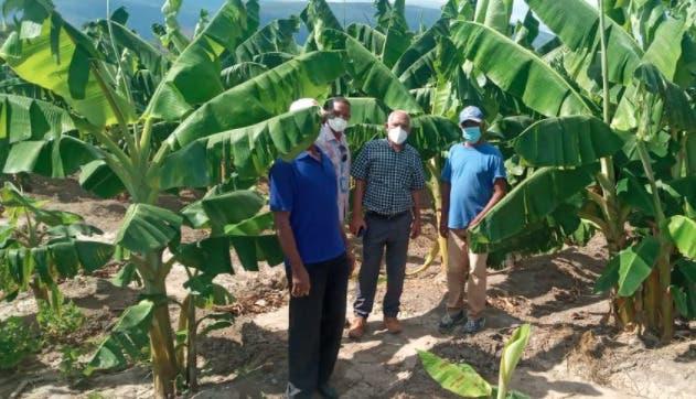 Feda financia proyectos producción de plátano y tilapia en Salinas y en Cabral