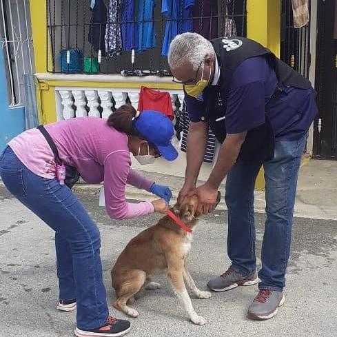 Realizan Jornada de vacunación a perros y gatos  contra el virus de la rabia