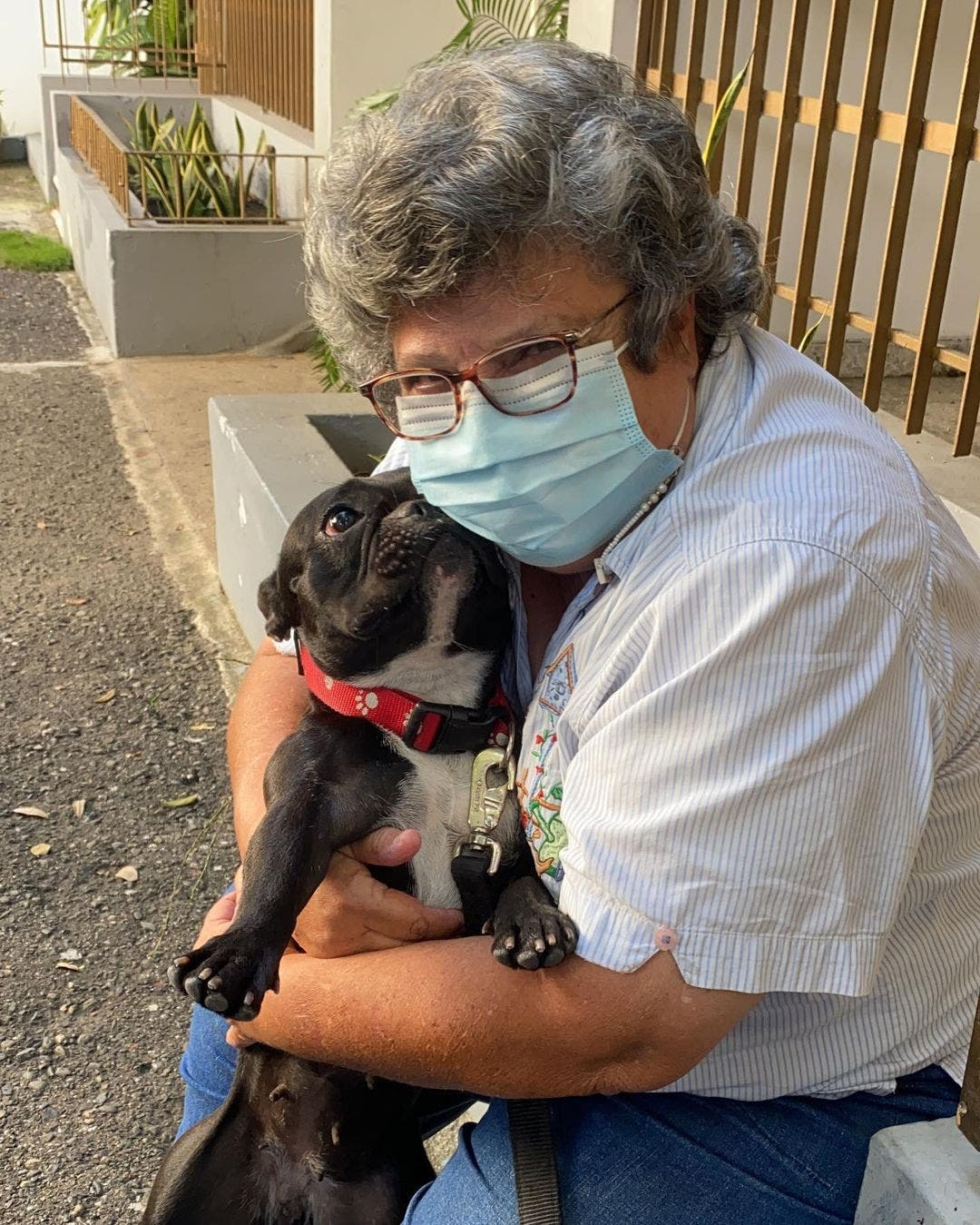 Fotos   Rescatan a Truffa, perrita que fue pateada por un hombre en Bella Vista