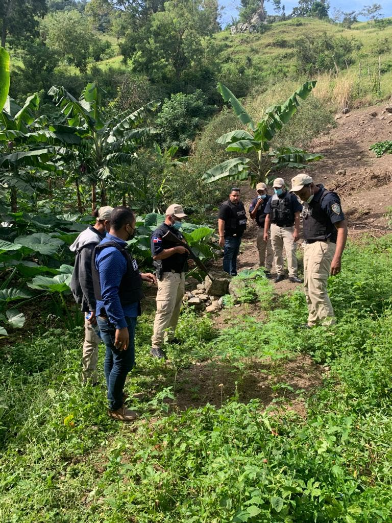 Decomisan plantación de marihuana en Santiago