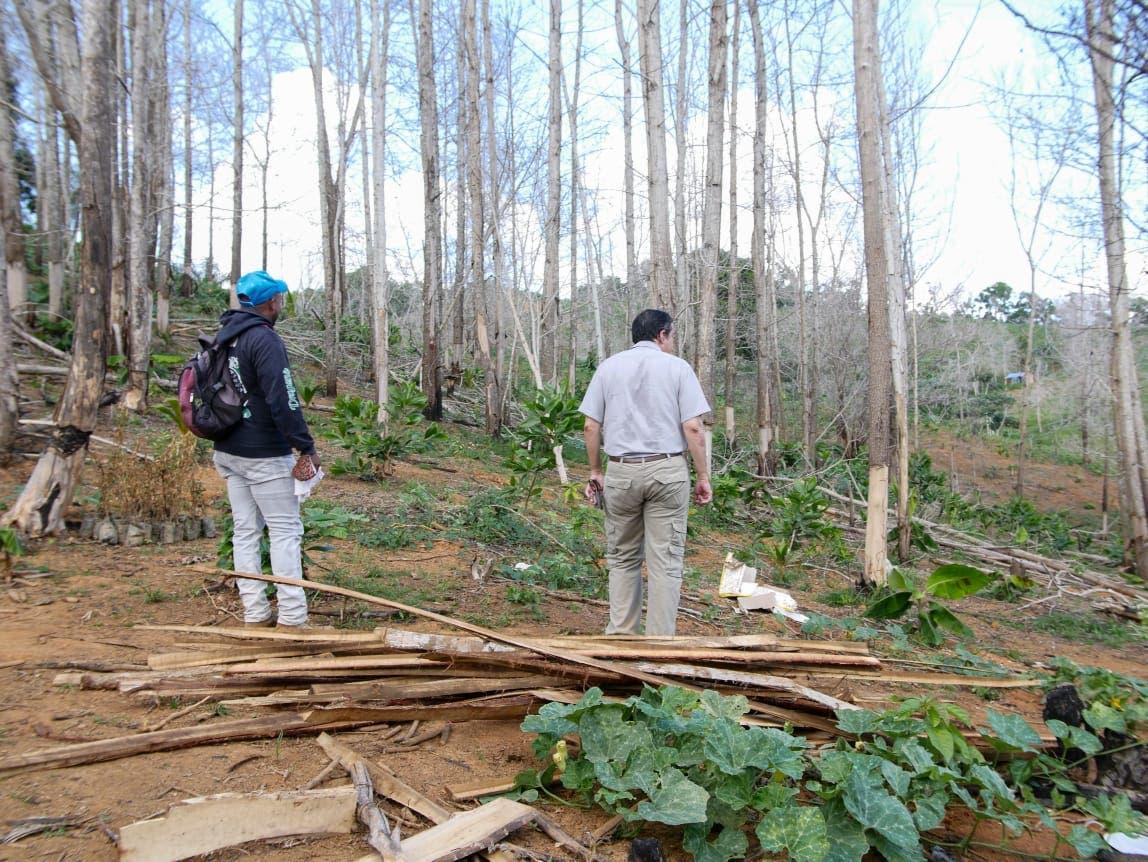 Hombre cortó más de 1,700 árboles en Yamasá
