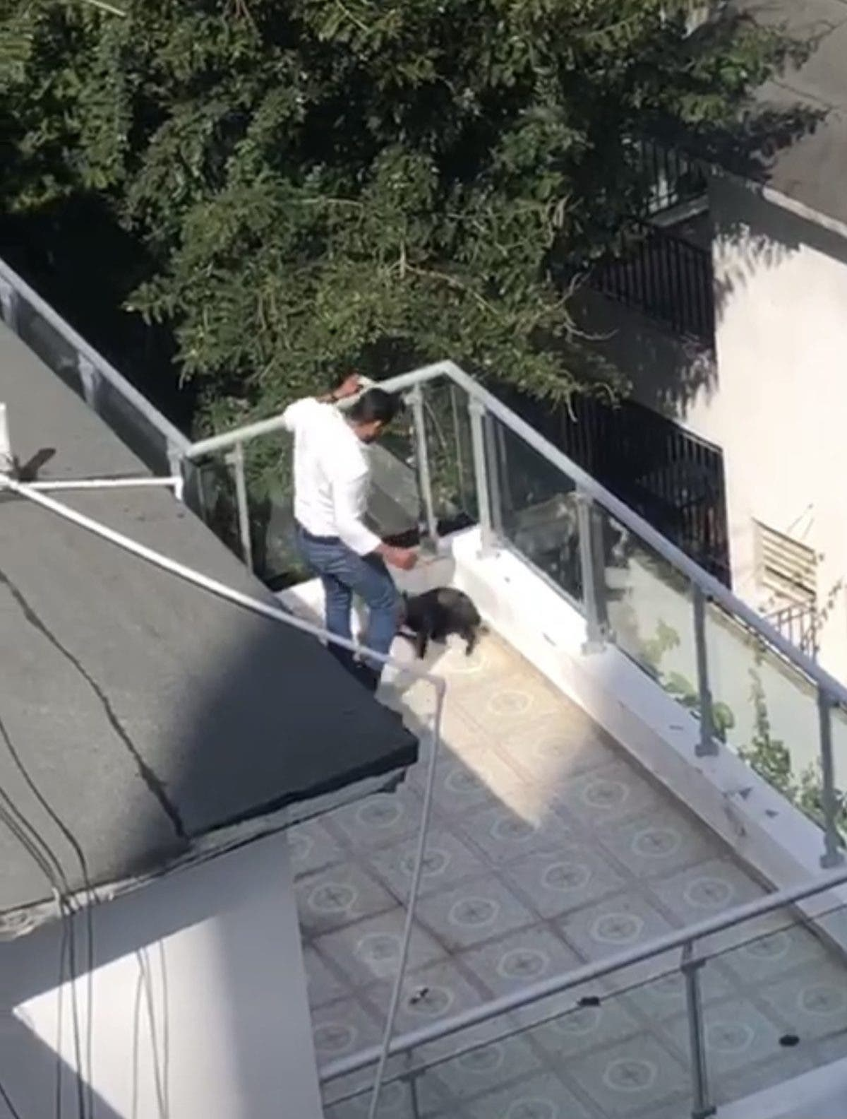 #VIRAL: Video muestra a hombre patear perro en Bella Vista