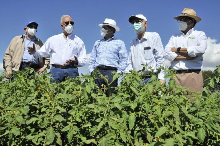 Gobierno a través de Agricultura irá en auxilio de productores de tomate