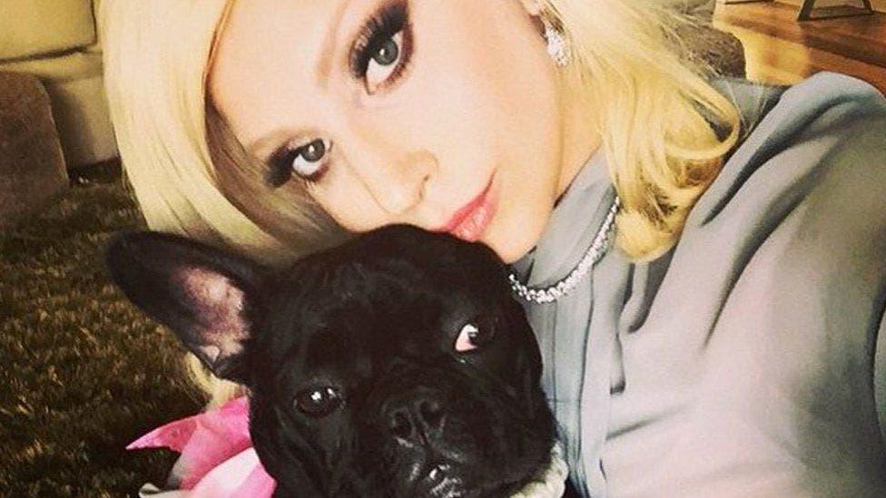 Roban perros a Lady Gaga; su empleado recibe disparo