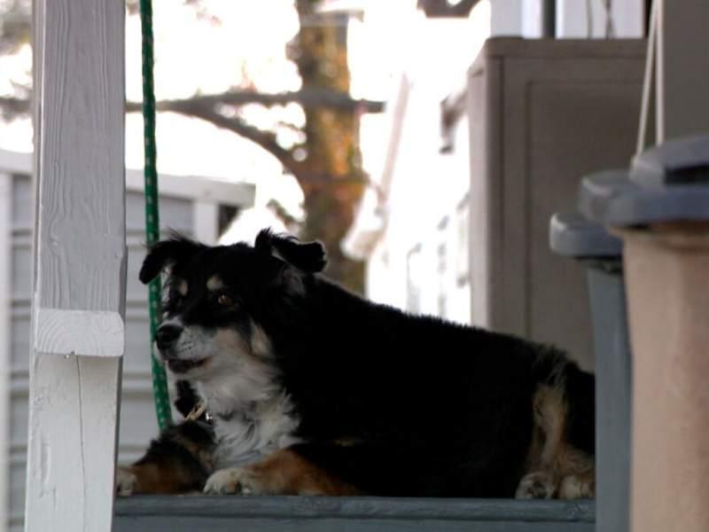 Hombre hereda 5 millones de dólares a su perro