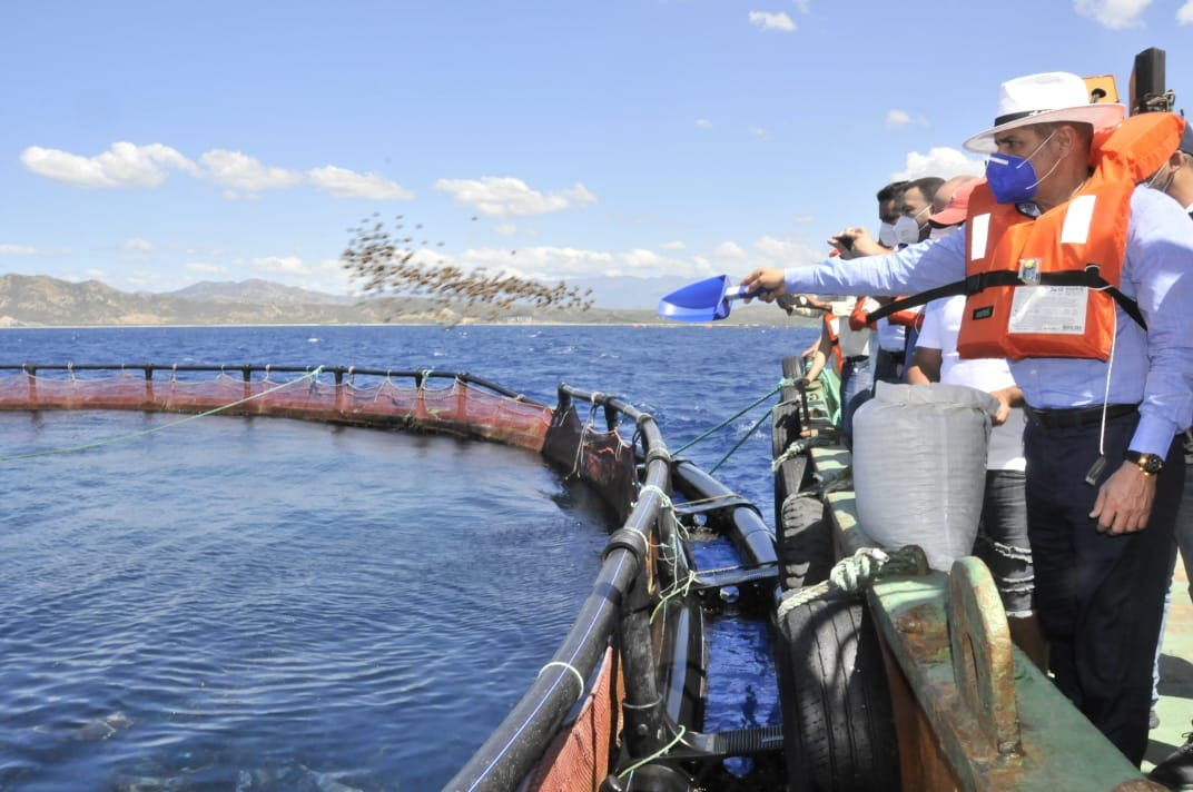 Agricultura busca fomentar producción y exportación de tilapias