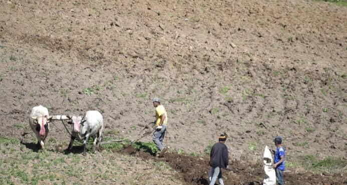 IAD y Medio Ambiente trabajan en reubicación productores de Valle Nuevo